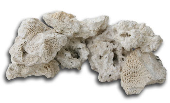 how to attach coral to live rock